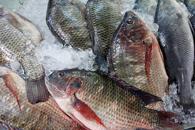 čerstvé ryby na ledu