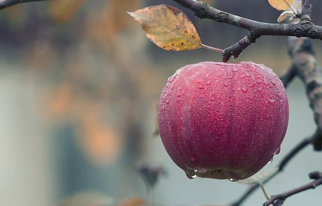 jablko na strome.jpg