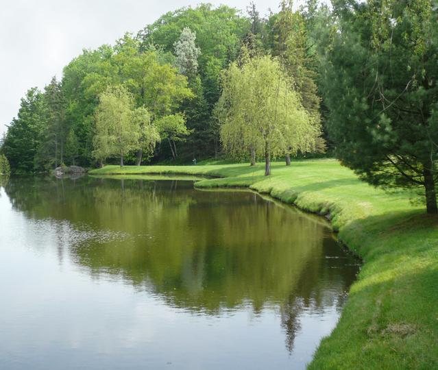 Jazero, stromy, príroda